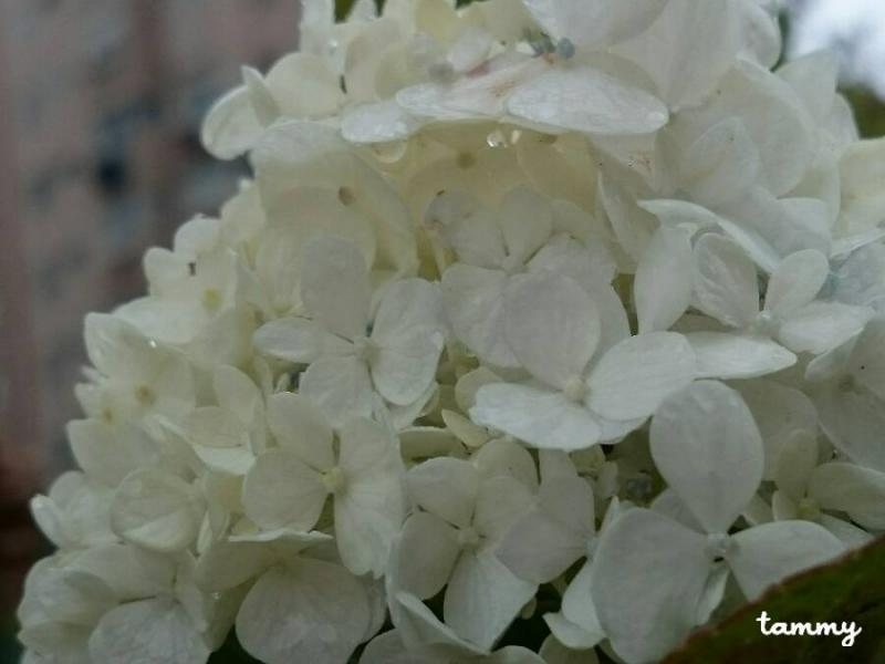 The Meaning Of White Color In The Flowers Tuetego